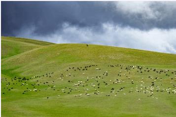 Un estudio internacional de varias universidades europeas determinó que los cambios en el uso de los pastos de montaña dio pie al crecimiento de los bosques de montaña de la cuenca mediterránea. Imagen: Pixabay