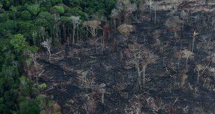 Adoptar la Amazonía