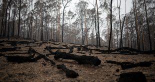 Bosques australianos