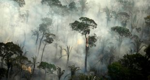 Humo de un incendio en un área de la selva amazónica