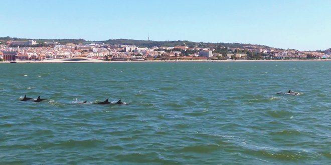 Delfines río Tajo Lisboa