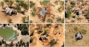 Una foto combinada muestra elefantes muertos en el Delta de Okavango, Botswana, mayo-junio de 2020