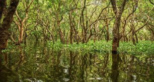 Día Internacional manglares