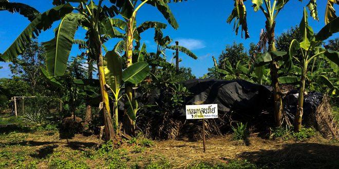 Global Witness homicidios ecologistas