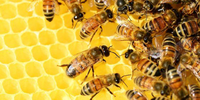 UE declive de las abejas