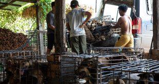 Camboya prohíbe carne de perro