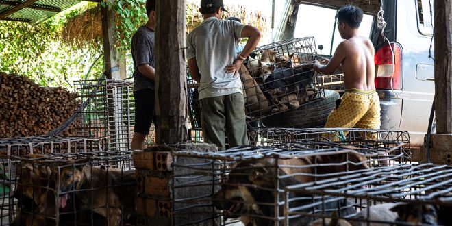 Una provincia de Camboya da el ejemplo y prohíbe la venta de carne de perro
