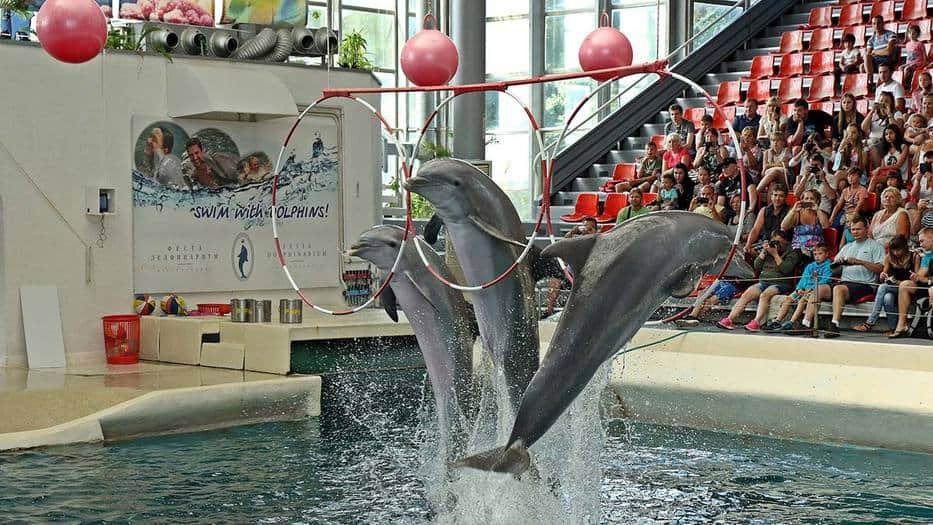 delfines-robots-ofrecen-la-libertad-a-los-cetaceos-en-cautiverio