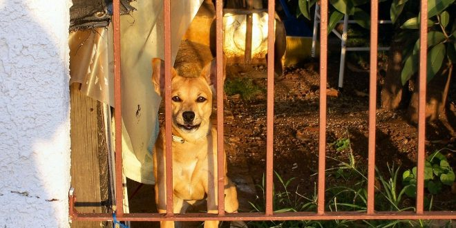 Corea del Norte suple a restaurantes con carne de perro