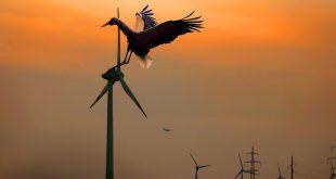 Energía eólica y vida silvestre, ¿convivencia posible