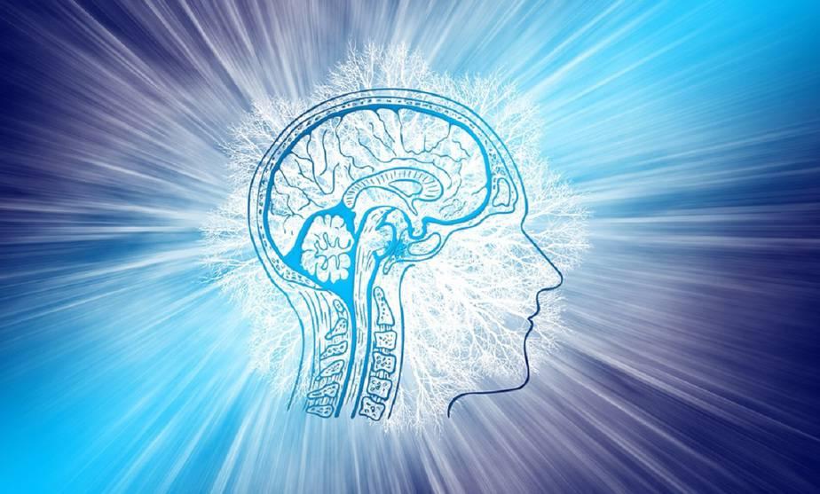 La salud del cerebro se decide antes y después de nacer