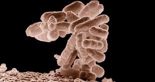 La ameba que come el cerebro