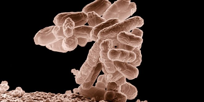 La ameba que destruye el cerebro ataca otra vez