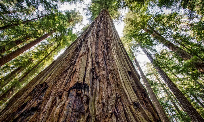 Bosques de secuoya en el parque nacional de Yosemite, California (Estados Unidos) (Jorge Villalba / Getty Images/iStockphoto)
