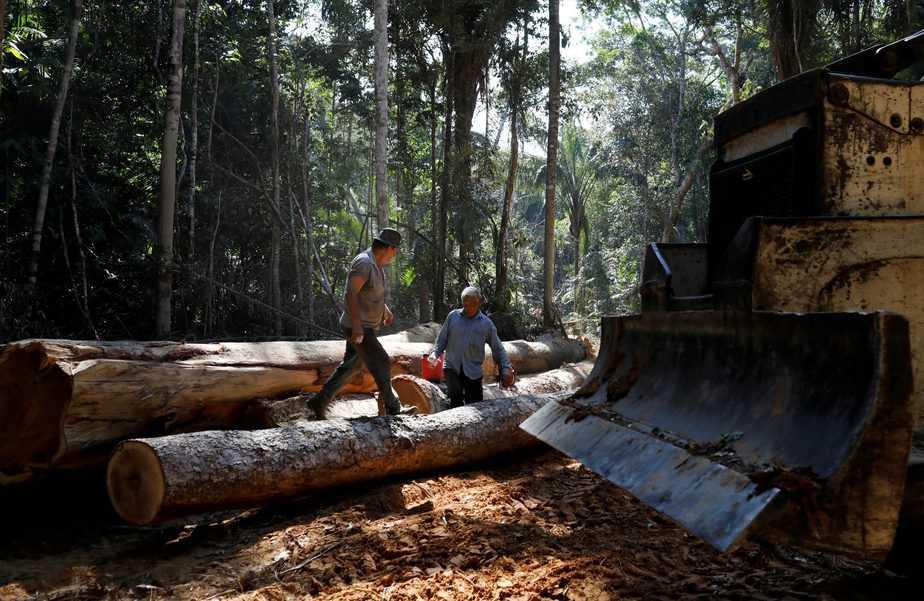 conservación del Amazonas