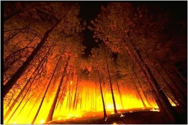 Aunque algunos países de África y Suramérica concentran hoy en día el mayor número de incendios, con lo que se acaba con biodiversidad y poblaciones, se sabe poco de ellos. Imagen: Pixabay