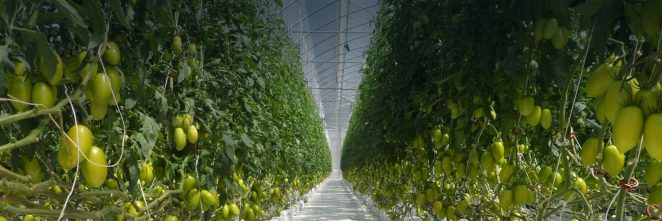 invernaderos plastico