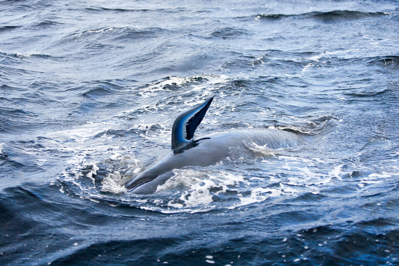 Ballenas varadas a lo largo de la costa cerca de la remota ciudad de Strahan en la costa oeste