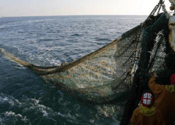 Lucha contra la sobrepesca