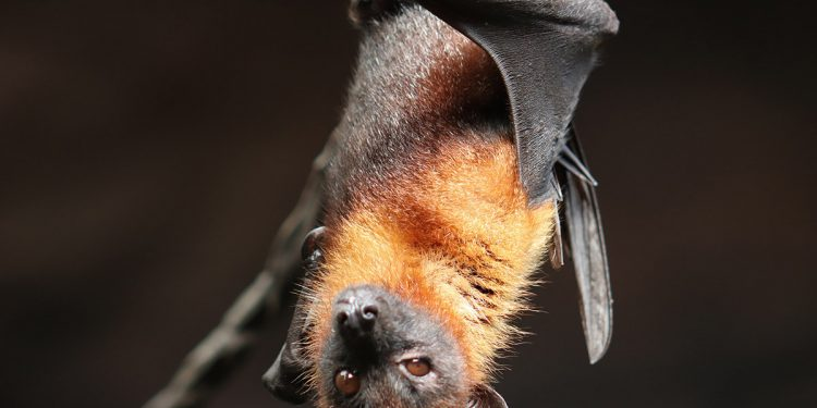 murciélagos generadores eólicos