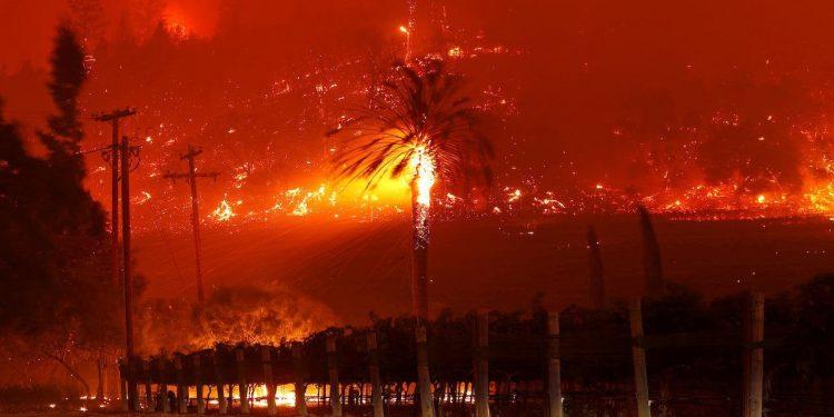 Un árbol hecho brasa cerca de un viñedo en Santa Helena, durante el Glass Fire, como fue bautizado el incendio que arrasa con el noreste californiano /REUTERS/Stephem Lam