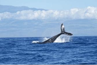 ballenas Nueva York