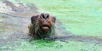Miles de crías de lobos marinos aparecieron en una playa de Namibia, en África, y se desconoce la razón / Imagen de Christel SAGNIEZ en Pixabay