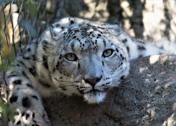 Extinción de especies / Imagen de Patrick Shields en Pixabay
