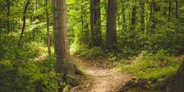La reforestación de bosques es una de las soluciones para frenar las emisiones y equilibrar el proceso / Imagen Pixabay