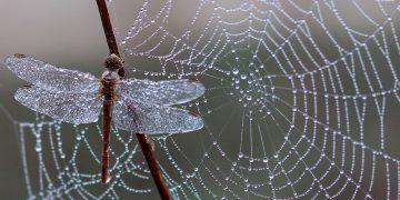 Filósofos plantean que se considere a los insectos como seres morales y se respeten sus derechos / Imagen de Adina Voicu en Pixabay