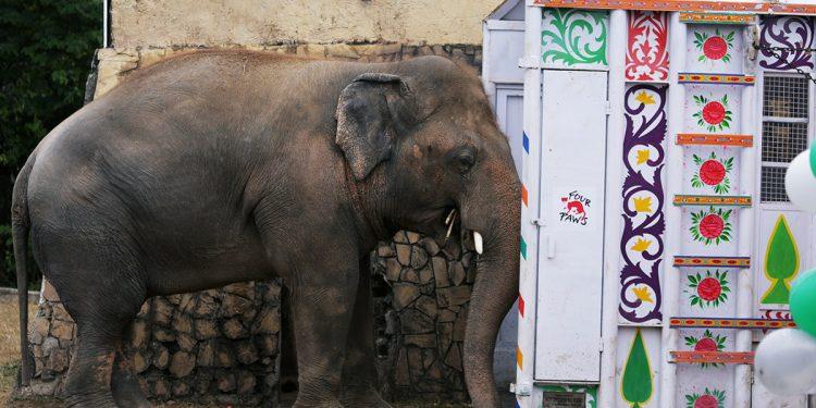 Namibia elefantes
