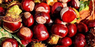 Llegó la temporada de castañas ¿cómo prepararlas? / Imagen de Couleur en Pixabay