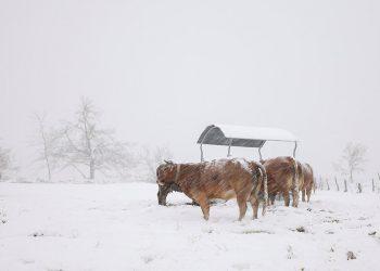 España bajas temperaturas