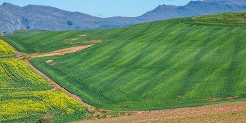 fotosíntesis cultivos