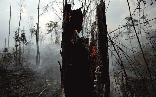 Bancos deforestación en Amazonas