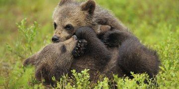 WWF propuesta
