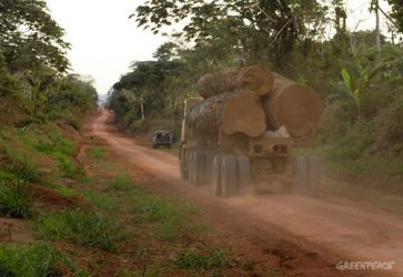 selva Congo