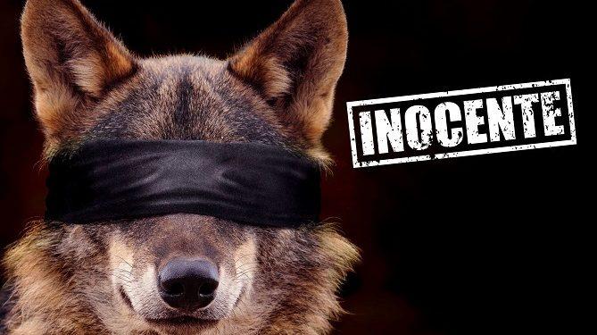 prohíben cazar lobos