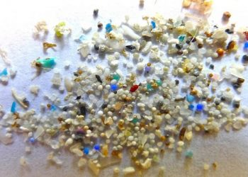 humanos ingieren microplásticos