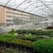 En lugares como Berlín, han comenzado a permitir que crezcan praderas de hierbas naturales o huertos urbanos en lugar del césped tradicional. REUTERS