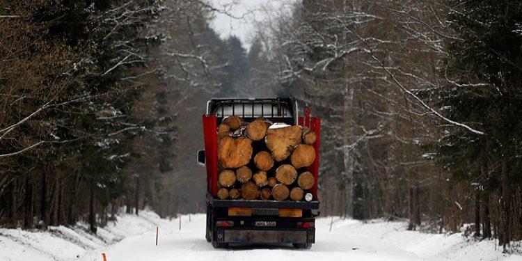 bosques de Europa