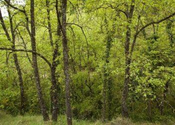 suelos forestales