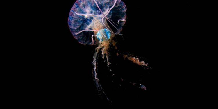 plástico en medusas