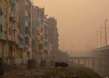 India carbón