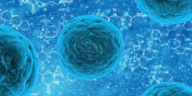 Construyen células sintéticas que crecen y se dividen