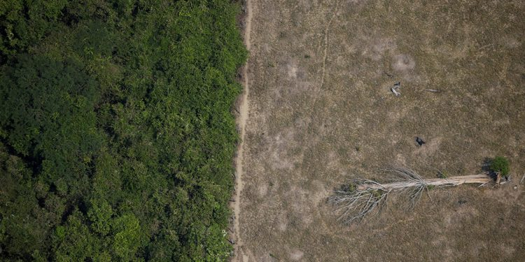 Amazonia carbono