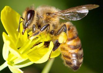 Dos abejas se viralizan en las redes sociales por abrir una botella de refresco
