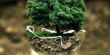 soluciones naturales emisiones