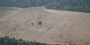 Brasil deforestación
