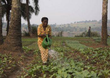 Cambio climático inseguridad alimentaria